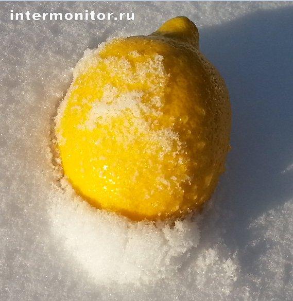 Лимон Новый Уренгой 2